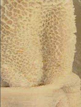 copy of Hähnchen Schenkel, Chicken Legs