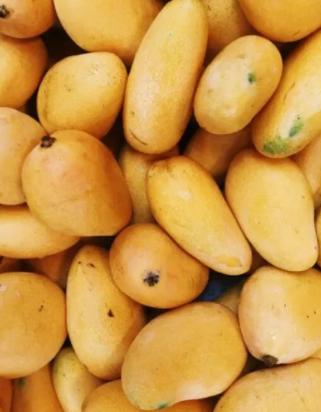 Sindhri-mango-b- Mango-Tukwila online market Germany