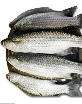 Bata Fish-Tukwila Online Grocery in Germany1