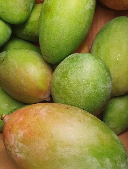 Green Mango Kacha Aam Grünes Mango-Tukwila online Market in Germany