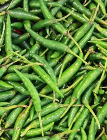 Green Chilli, Grünes Chilli, Morich-c-Tukwila online Market-Germany