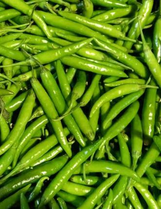 Green Chilli, Grünes Chilli, Morich-n-Tukwila online Market-Germany