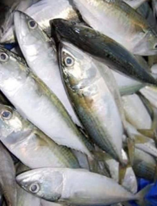 Indian Merkel-Fish-mach-Tukwila online market Germany
