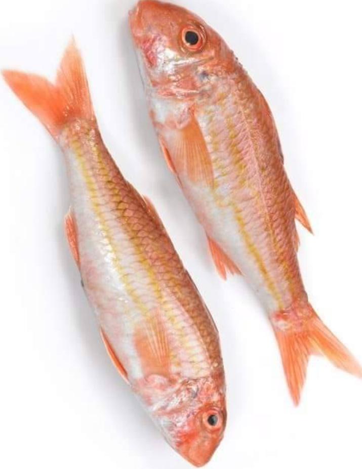 Red-Mullet-Fish-mach-Tukwila online market Germany