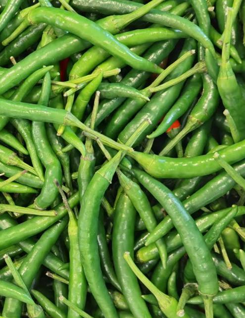 Green Chilli, Grünes Chilli, Morich-e-Tukwila online Market-Germany