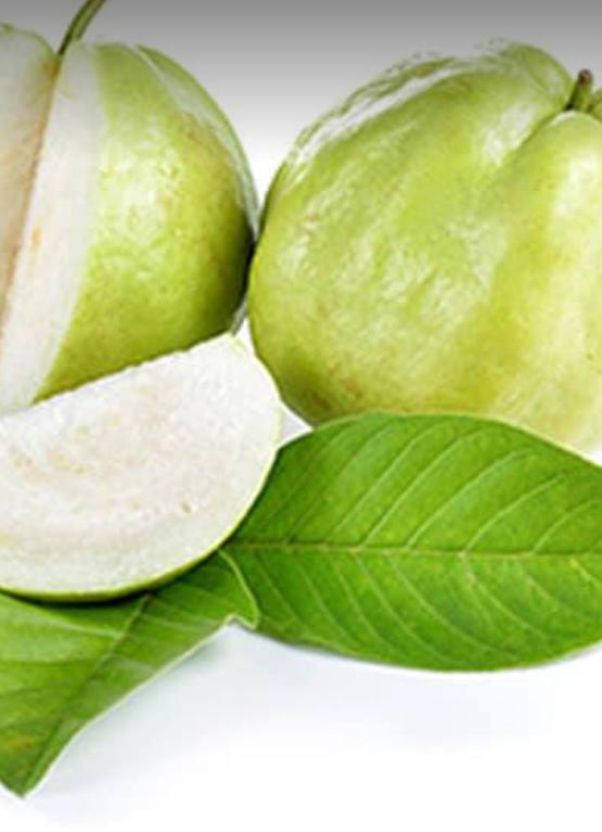 Guava-Peyera-2_Tukwila online market Germany