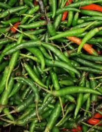 Green Chilli, Grünes Chilli, Morich-1-Tukwila online Market-Germany