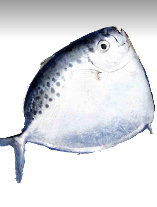 Moonfish Fisch_1kg-3-Tukwila online Market in Germany